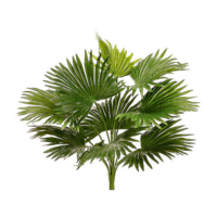 Fan Palm Bush