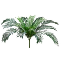 37 Inch Cycas Palm Bush x15 with 845 Leaves