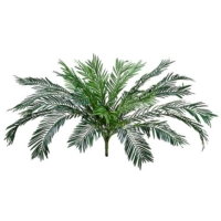 37 Inch Cycas Palm Bush x24 w/1352 Leaves