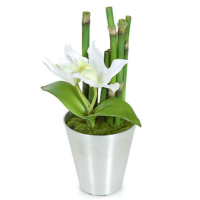 10 Inch Potted Cattleya and Bamboo Plant in Tin Pot