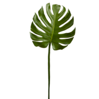 41 Inch Monstera Leaf
