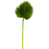 37 Inch H x 12.5 Inch D Soft Fan Palm Leaf Spray