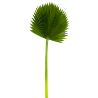 47 Inch H x 17.5 Inch D Soft Fan Palm Leaf Spray