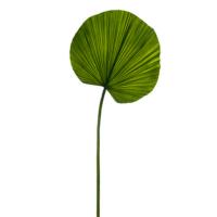 40 Inch Fan Palm Leaf Spray