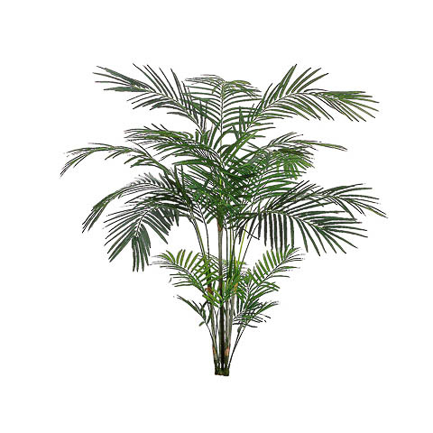 6 Foot Tropical Areca Palm x4 with 705 Leaves