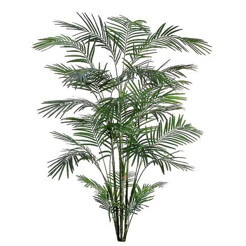 8 Foot Tropical Areca Palm x6 with 1017 Leaves