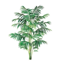 10 Foot Areca Palm with 732 Leaves
