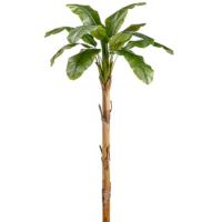 101 Inch Banana Tree