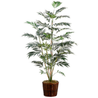 7 Foot Bamboo Palm in Basket