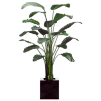 8.5' Bird of Paradise Plant in Resin Planter