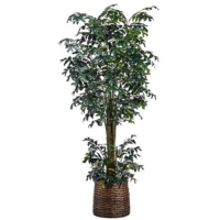 10 Foot Fishtail Palm Tree in Basket