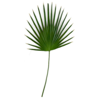 48 Inch PVC Washingtonia Palm Branch