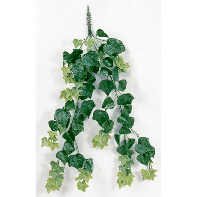 36 Inch Outdoor English Ivy Vine