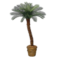 Cycas Palm Trees