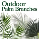 Outdoor Palm Fronds from Amazing Palm Trees