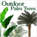 Outdoor Palm Trees from Amazing Palm Trees