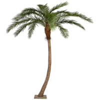 14 Foot Phoenix Palm Tree - Pipe Only - Base Not Included