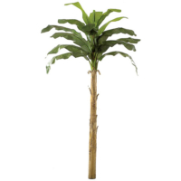12 Foot Banana Palm Tree
