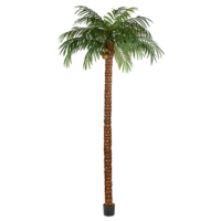15 Foot Coconut Palm Tree
