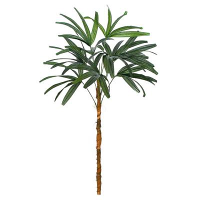 4 Foot Lady Palm Stem