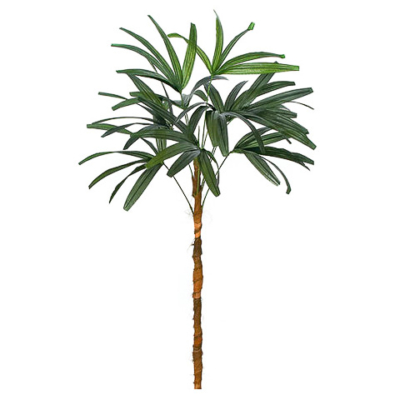 6 Foot Lady Palm Stem