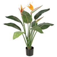 3.5 Foot Bird of Paradise Plant