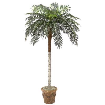 8.5 Foot Phoenix Palm Tree