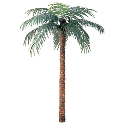 12 Foot Coconut Palm Tree
