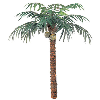 9 Foot Coconut Palm Tree