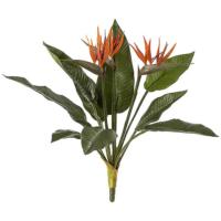 21 Inch Bird of Paradise Plant
