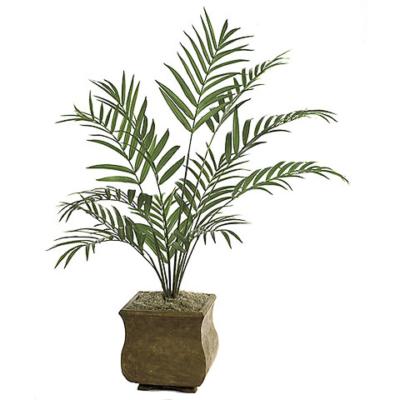 7 Foot Kentia Palm Tree