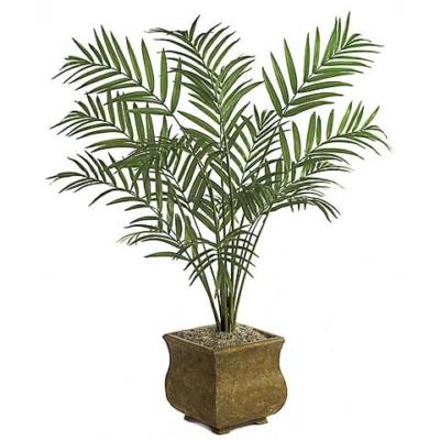 8 Foot Kentia Palm Tree