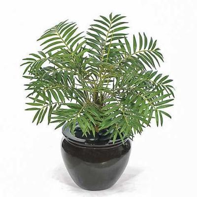 17 Inch Mini Bella Palm