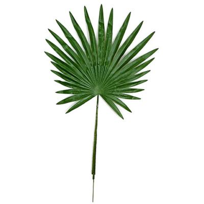 32 Inch Fan Palm Branch (Sold by Dozen)