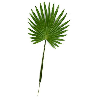 30 Inch Fan Palm Branch (Sold by Dozen)