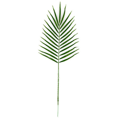30 Inch Date Palm Branch (Sold by Dozen)