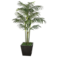 10 Foot Golden Cane Palm Tree x 4 (5' Tall, 7' Tall, and 10' Tall)