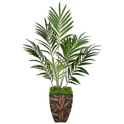 6.5 Foot IFR Kentia Palm Tree