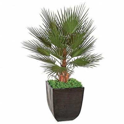 5 Foot PVC Washingtonia Palm Tree