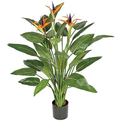 55 Inch Bird of Paradise Plant