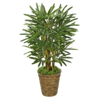 3 Foot Lady Palm Tree
