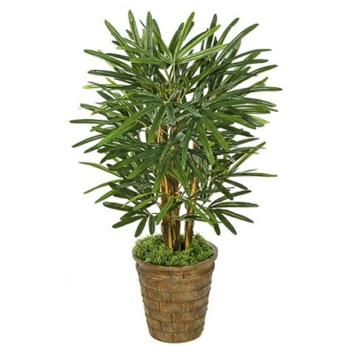 3 Foot Lady Palm Tree
