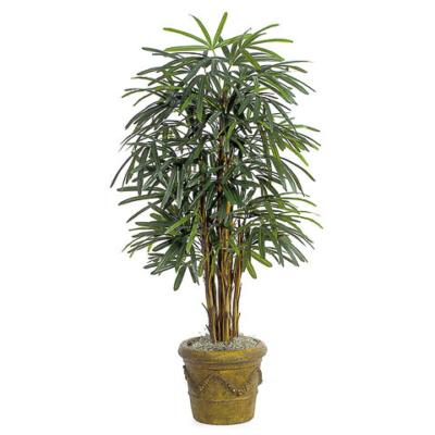 5 Foot Lady Palm Tree