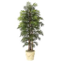 6 Foot Parlour Palm Tree
