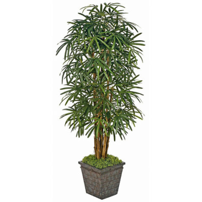 7 Foot Lady Palm Tree