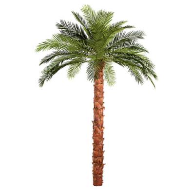13 Foot IFR Phoenix Palm Tree